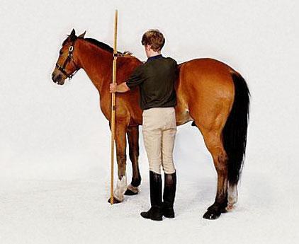 Comment mesure-t'on les chevaux ?